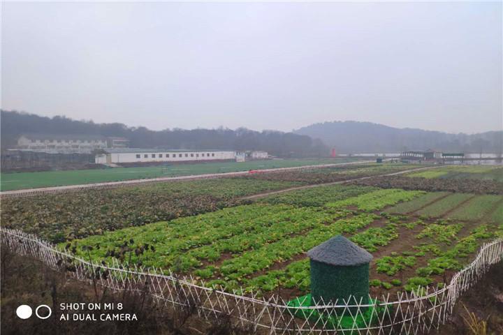 武汉度假村.jpg